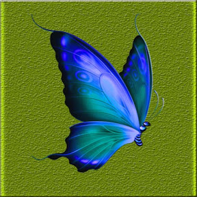 BLUE BUTTERFLY PRO