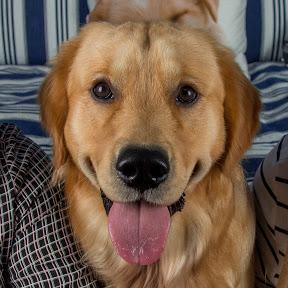 Golden Paw - Hundekanal
