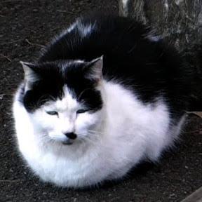 Feralcats99