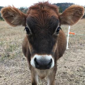 Clover Mountain Dairy