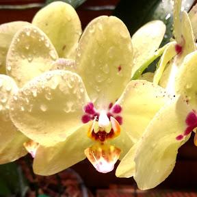 Orquídeas sem mistério