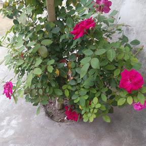 dsj gardening