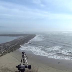 Mavericks Beach - Topic