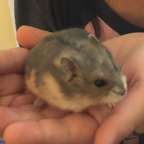 The Hamster Cam