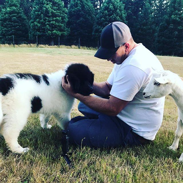 Ummm what is that... 😁#livestockguardiandog guardian #puppy
