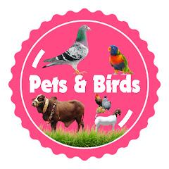 Pets & Birds