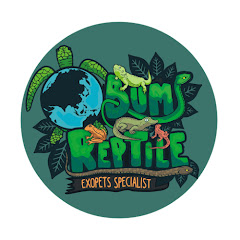 Bumi Reptile
