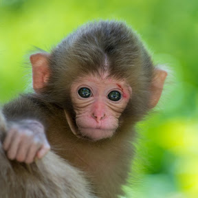 Monkey Jue