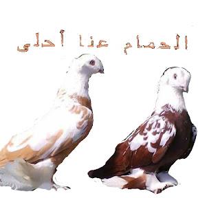 الحمام عنا احلى The most beautiful pigeons