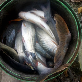 fish market Hooghly