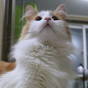 캣잎이는 고양이