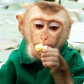 Monkey Johny