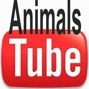 Tierfilme und Informationen rund um Tiere