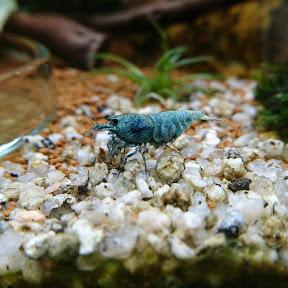 ShrimpPuddle - Wirbellose und mehr!