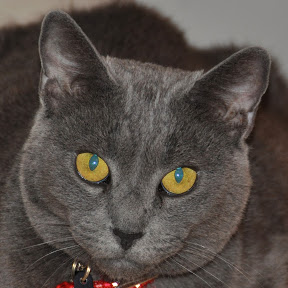 catman916