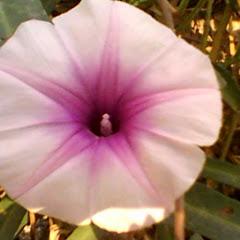 Ashraf Botanical Garden