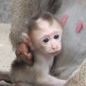 Daily Monkey Life