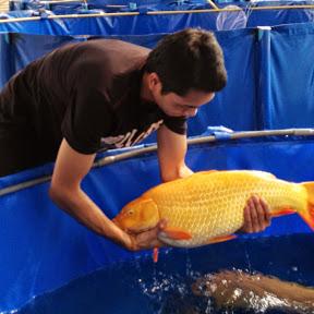 thai carp