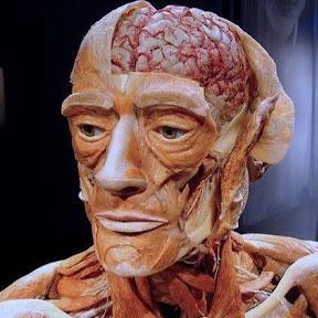 Histologia, Fisiologia & Anatomia Humana