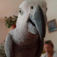 Hugo the parrot