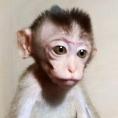 Monkey Marie