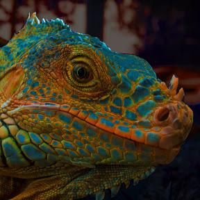 Cosmic Velociraptor