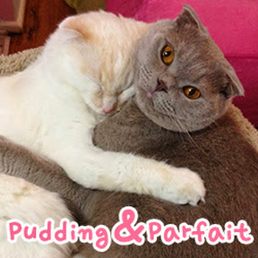 Pudding & Parfait