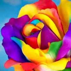 Colour Artist
