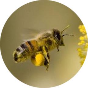 Пчела и Пасечник