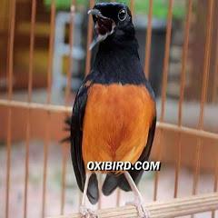 Oxibird Chanel