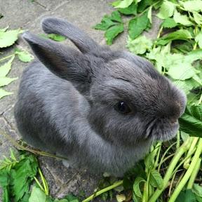 i like bunnies