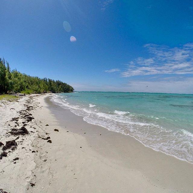#Ileauxcerfs une île 🌴 à la fois touristique et sauvage ! #ilemaurice