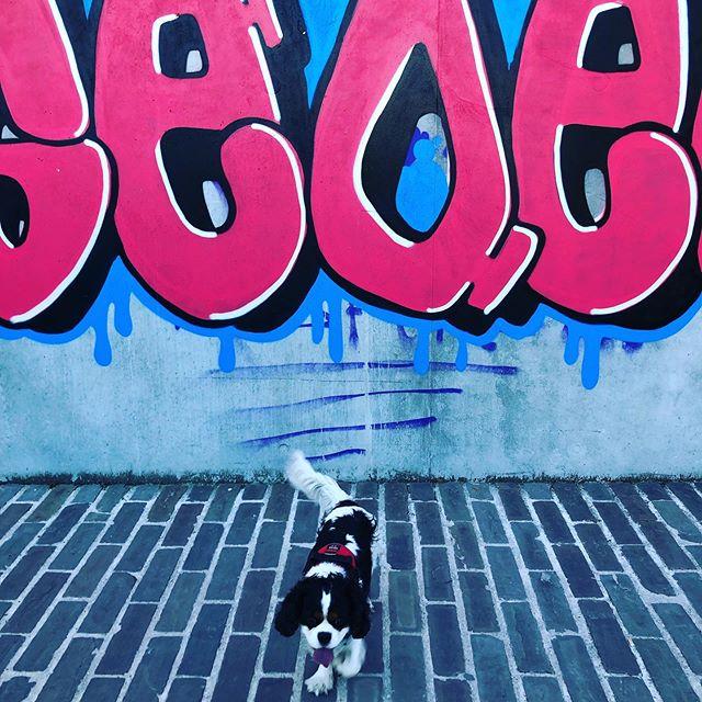 Profiter des derniers jours de beau temps pour faire de loooooongues balades avec le Max 💕🐾 #cavsofinstagram #streetartparis #streetartdaily #cavalierkingcharles #cavaliercorner #cavaliercommunity #streetartphoto