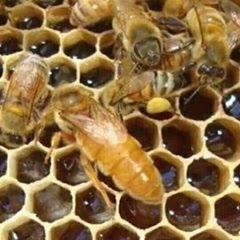 مشروع تربية النحل beekeeping