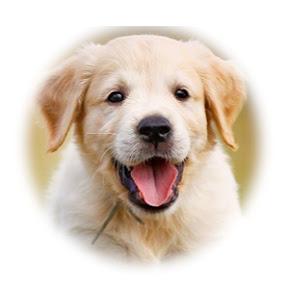Cute Dogs TV
