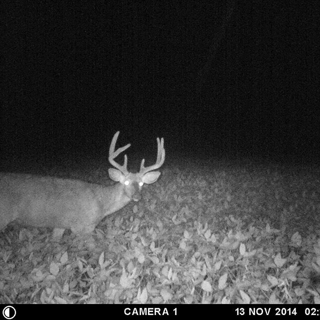 Nice to start seeing some mature bucks moving around a bit more, season starts in 15 days. #moultriecam #moultrie #beanfields #beabettercammer #sbolive