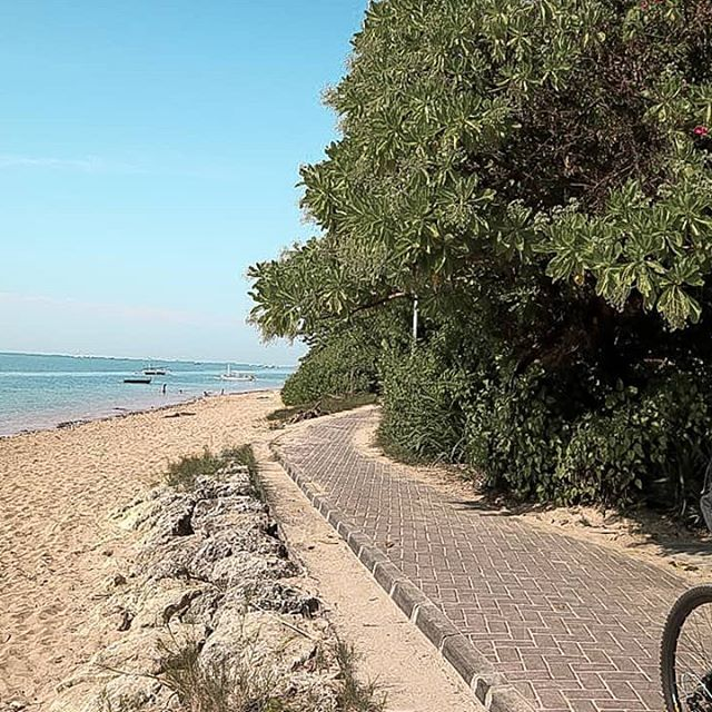 Sanur is one of the best places to watch sunrise in Bali, and cycling around sanur is probably the best thing to do right after you watched the sunrise! __ it costs around Rp 30k to rent a bike here in #sanur for 5 hours.