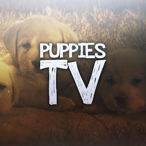 Puppies TV