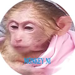 Monkey Baby Ni