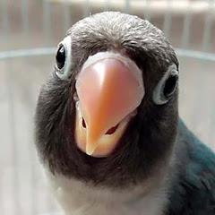 Sekolah Burung