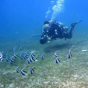 Poussin Diver
