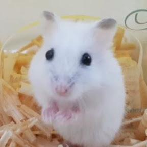 Smart Hamster