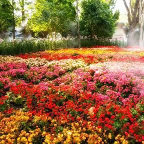 Garden of Perfume