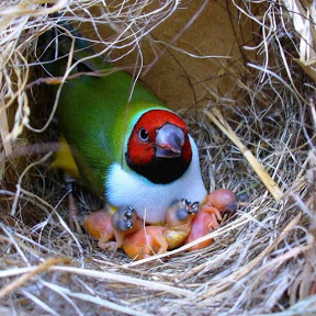 Birds Market