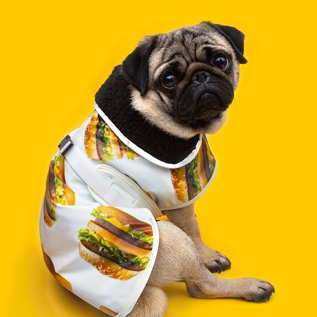 Win this cute and exclusive Big Mac jacket (size M)! Your dog deserves a little extra for #internationaldogday.  How to win: 1. Share this post in your Story 2. Tag us in it 3. And tell us why your furry friend really needs this We'll pick 17 winners on 30/08! • • • #McDo #McDonalds #DogDay #Dogs #BigMac #burger #Pug #Dog