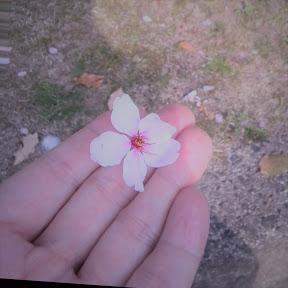 桜乱咲良 sakuran - Minakuroro904
