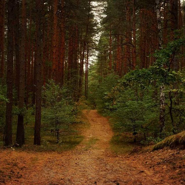 Leśne ścieżki 🌲🌳#las #ścieżka #lato #przyroda #kolory #natura #spokój #spacer #polska #forest #path #summer #nature #colors #calm #walk #silence #poland