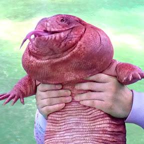 MacGyver the Lizard