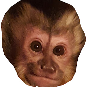 Monkey Lucy Official