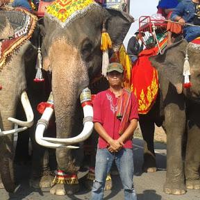 คน กับช้าง